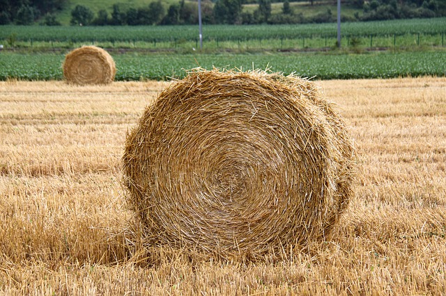Photo of haystacks in a field